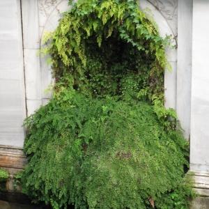 Ferns, Villa Guila