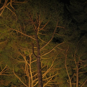 Nightime at the Villa Aurelia